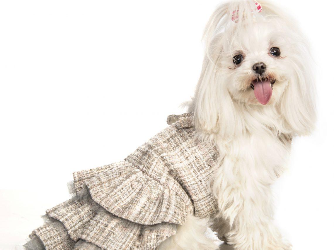 Guardaroba Per Cani.Lollipet Moda Per Cani All Insegna Dell Handmade E Del