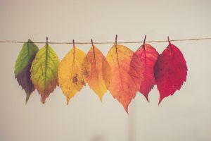 Cosa fare in autunno in Toscana