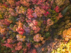 cosa fare d'autunno in Toscana