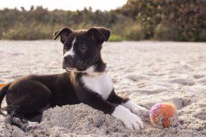 in spiaggia in Toscana con il cane