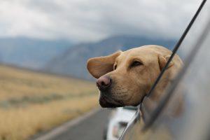 Migliore vacanza con il cane